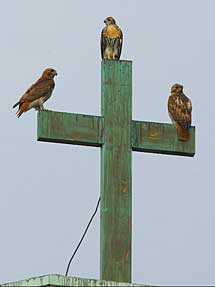 Stationed on the Cross